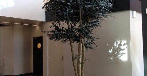 arbres reconstitues4